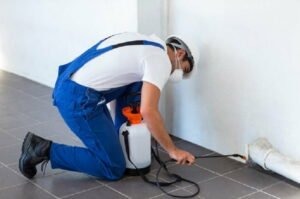 Seek help from an organic pest control expert who specializes in ants.