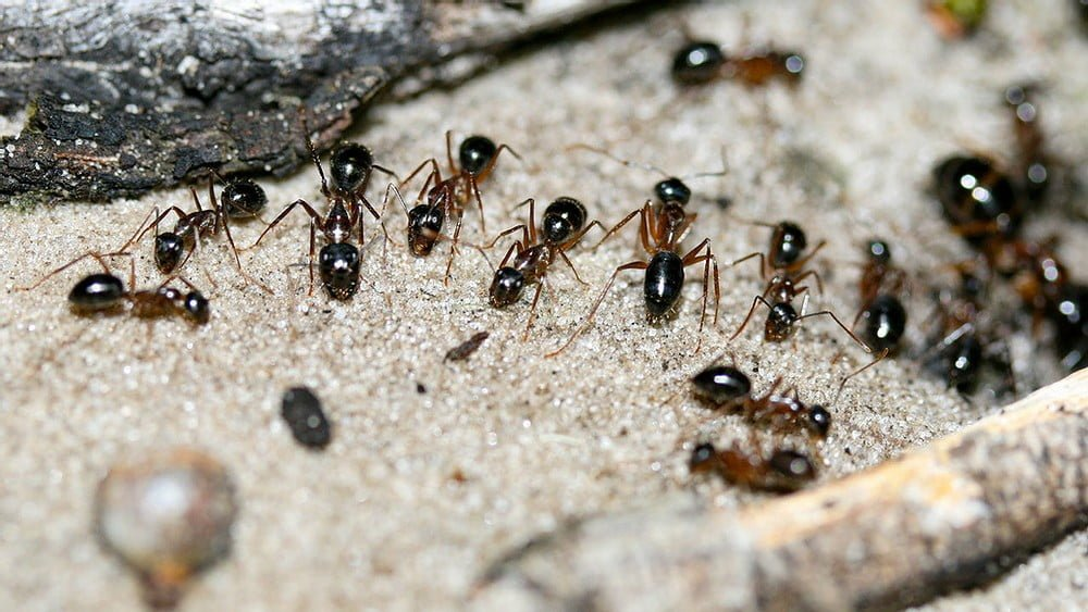 Why You Have House Ants in Beaverton Oregon in the Fall