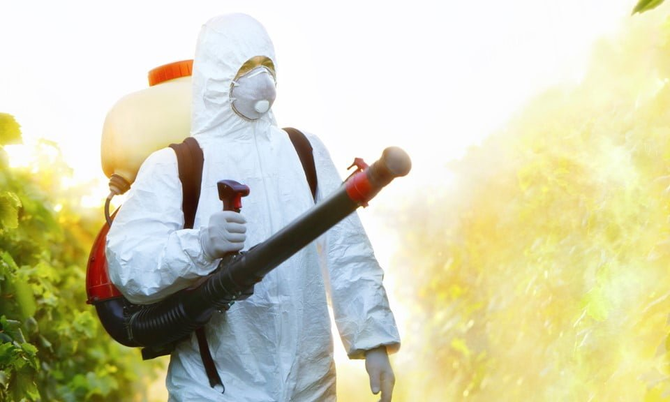 Organic IPM: Foliar Sprays for Cannabis Pests
