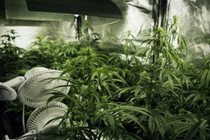 Air Circulation & Ventilation: How to Calculate CFM for Your Cannabis Grow Room