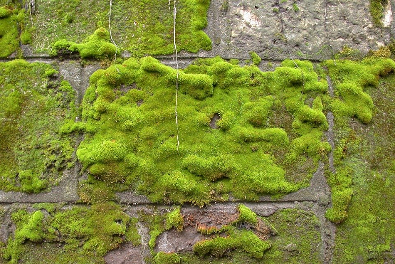 Structural Moss Removal and Management