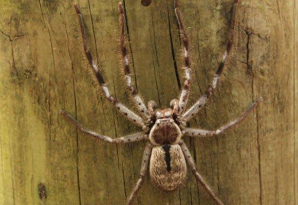 Spider-Pest-Cnotrol
