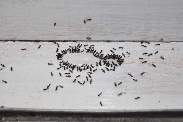 house ants Beaverton