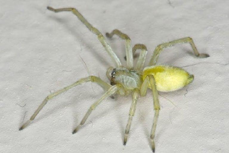 spider pest control beaverton