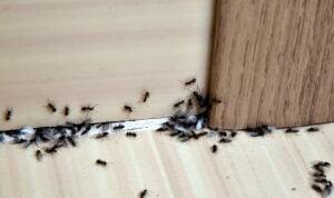 ant pest control beaverton