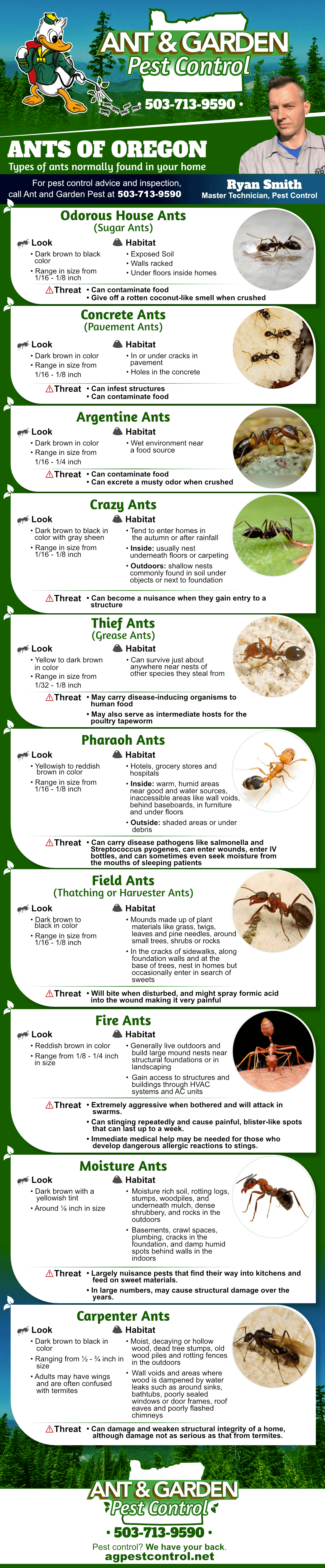 types of ants in Oregon