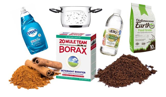 get rid of small black ants