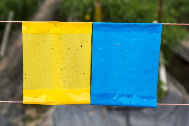 yellow sticky traps blue sticky traps