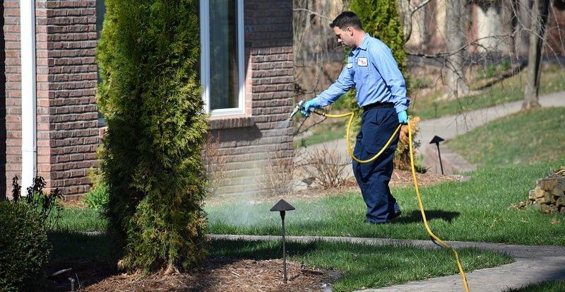 pest control technician kill ants in yard