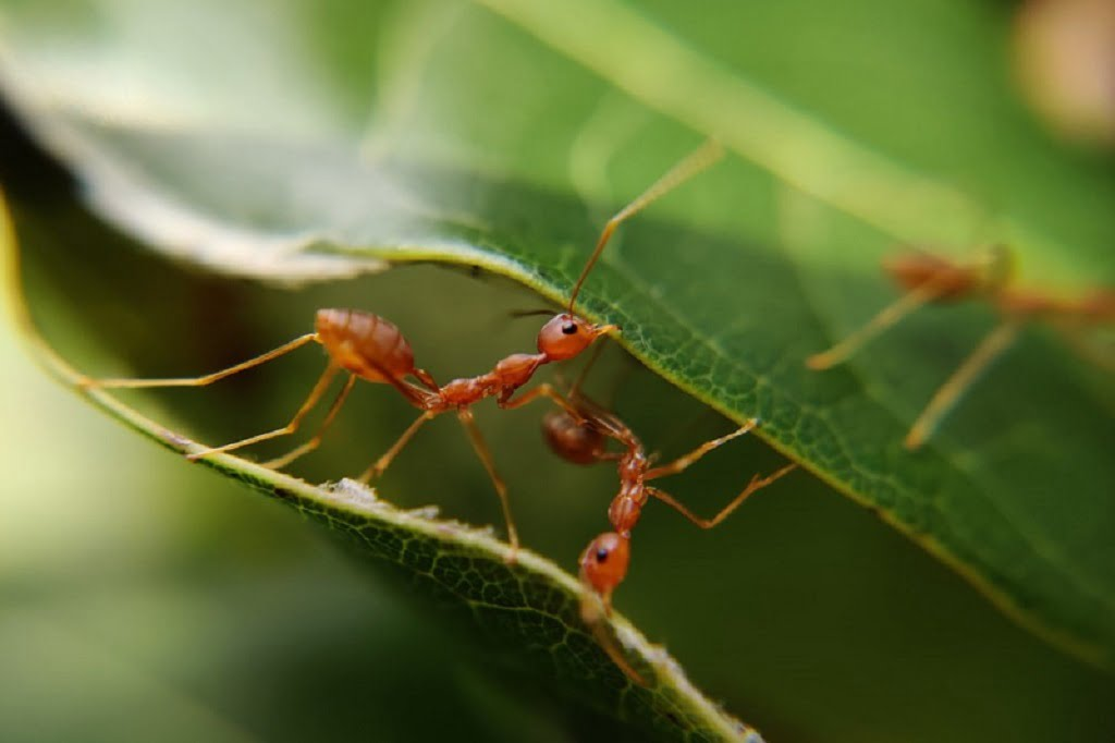 Eco-Friendly Ways to Get Rid of Ants