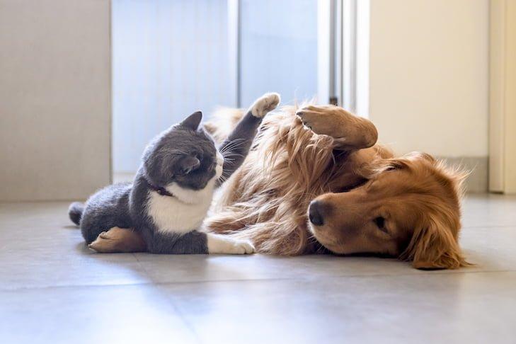 pet safe pest control