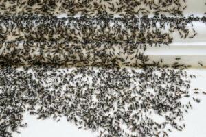 prevent ant infestation