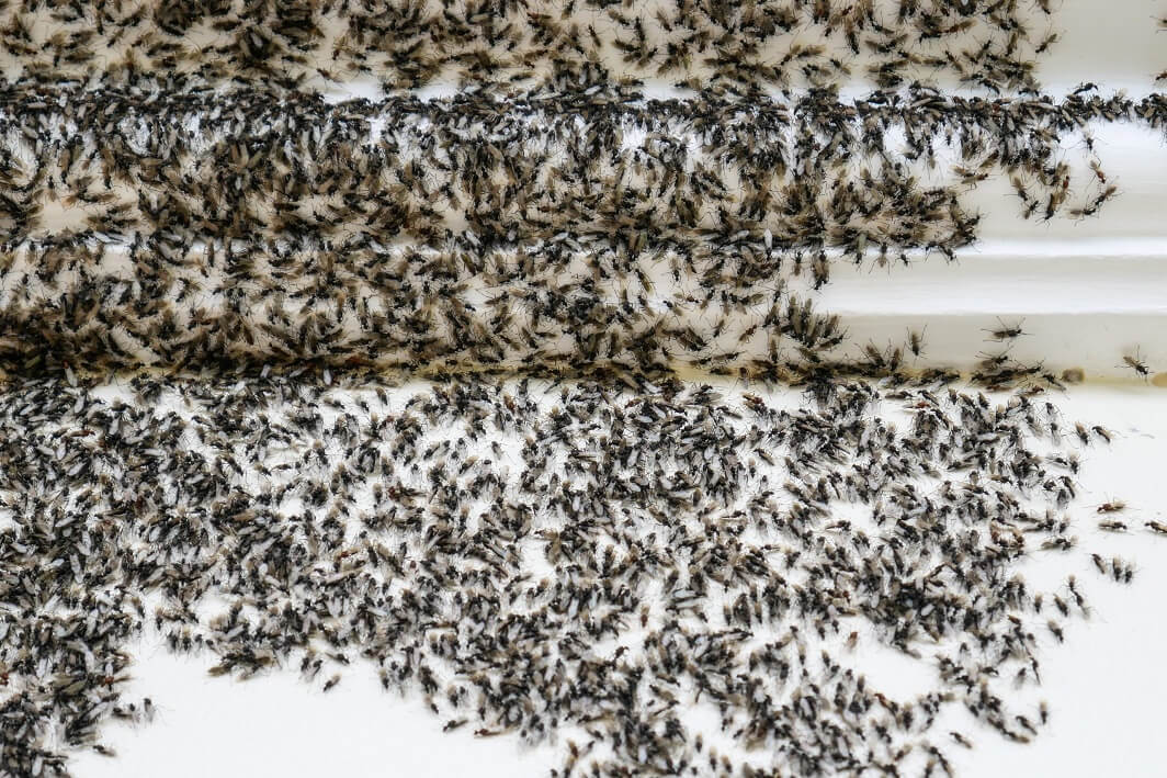 How to Get Rid of an Ant Infestation in Your Oregon Home