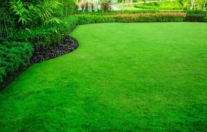 control weeds in lawn