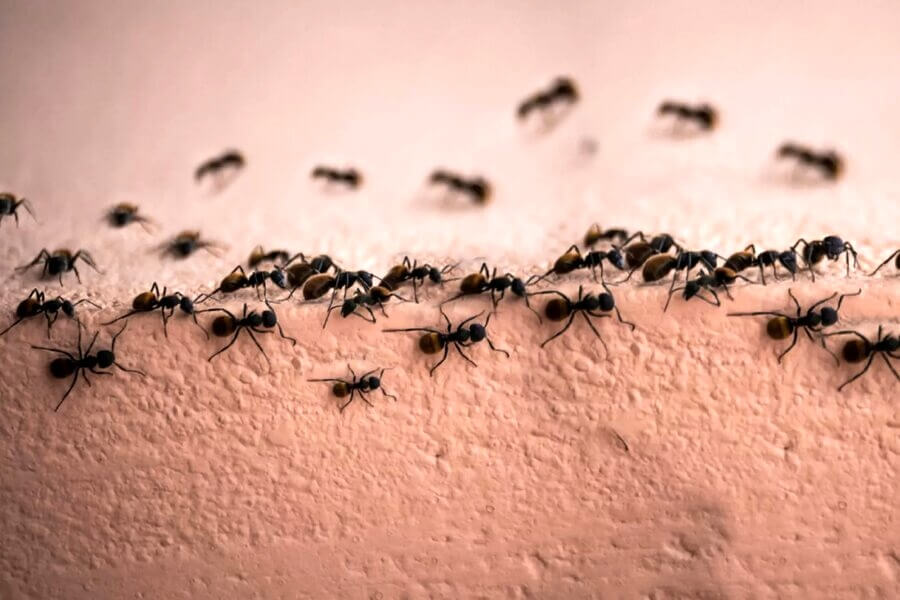 Why You Have Ants in the House Even With No Food Source