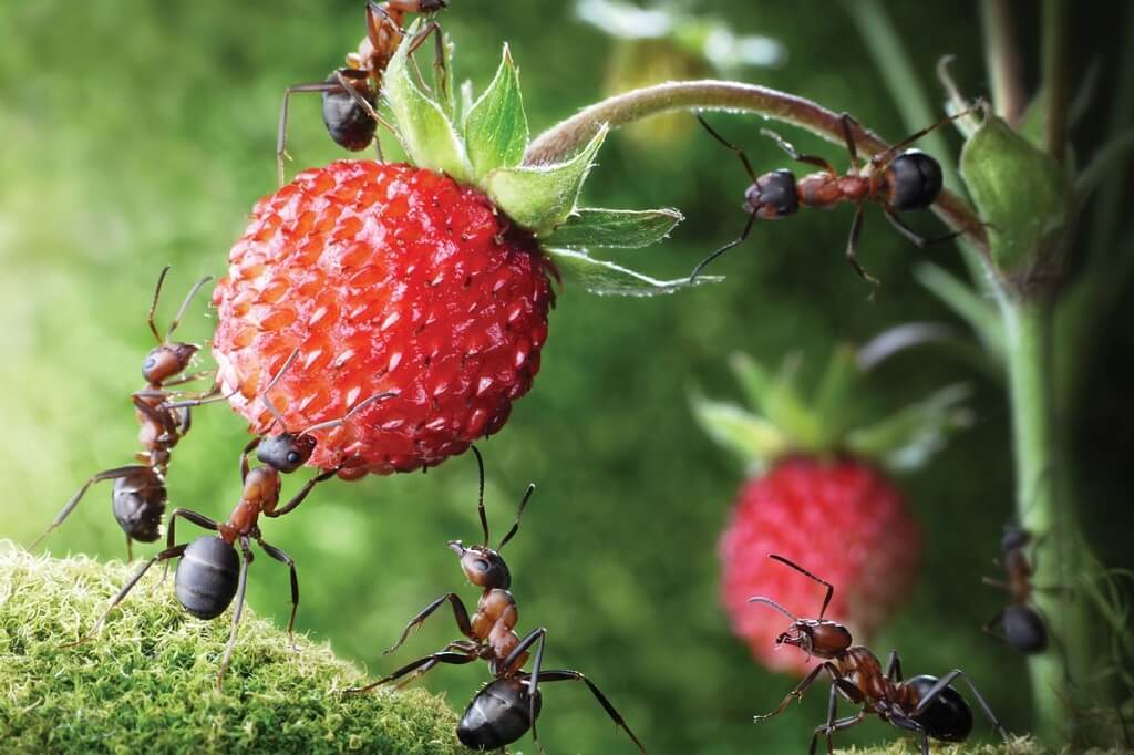 What Foods Attract Ants the Most?