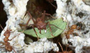 ants fungus