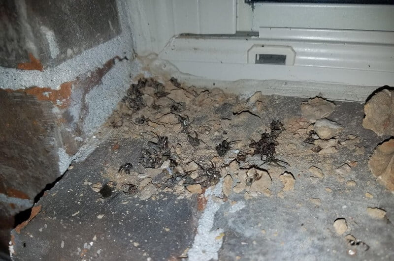 house spiders in basement