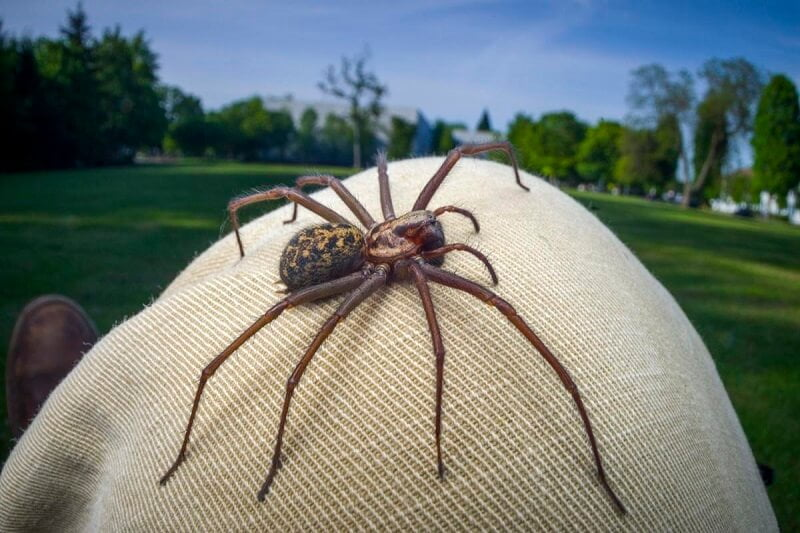 Common Spiders in Western Oregon