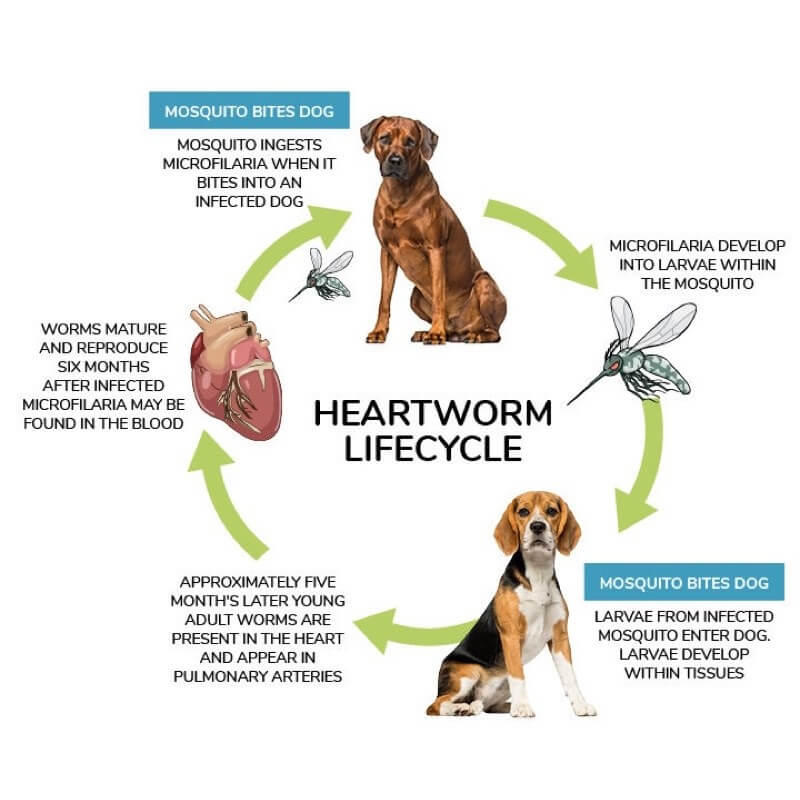 canine disease from pests