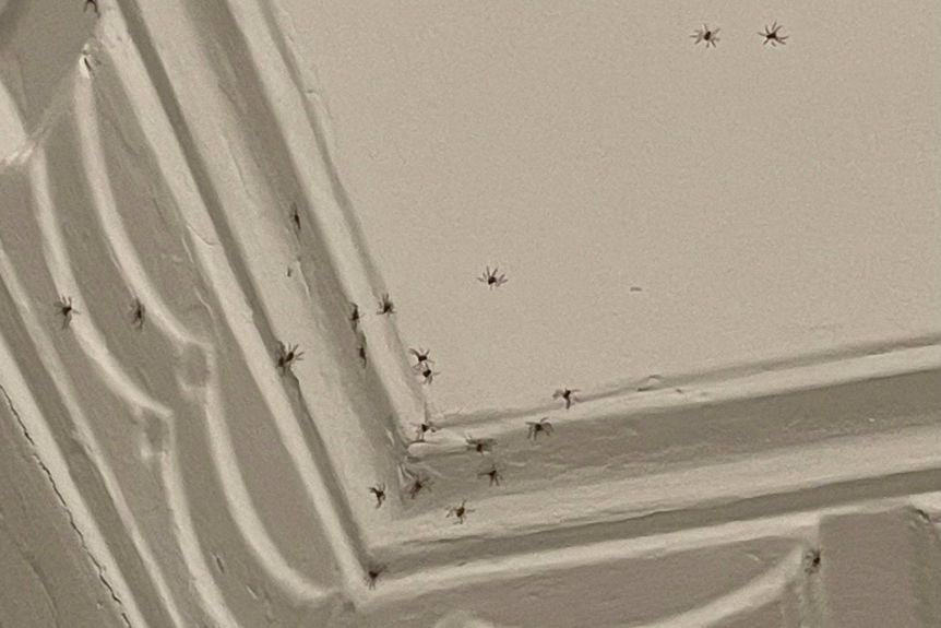 Spider Control: 6 Causes of a Spider Infestation